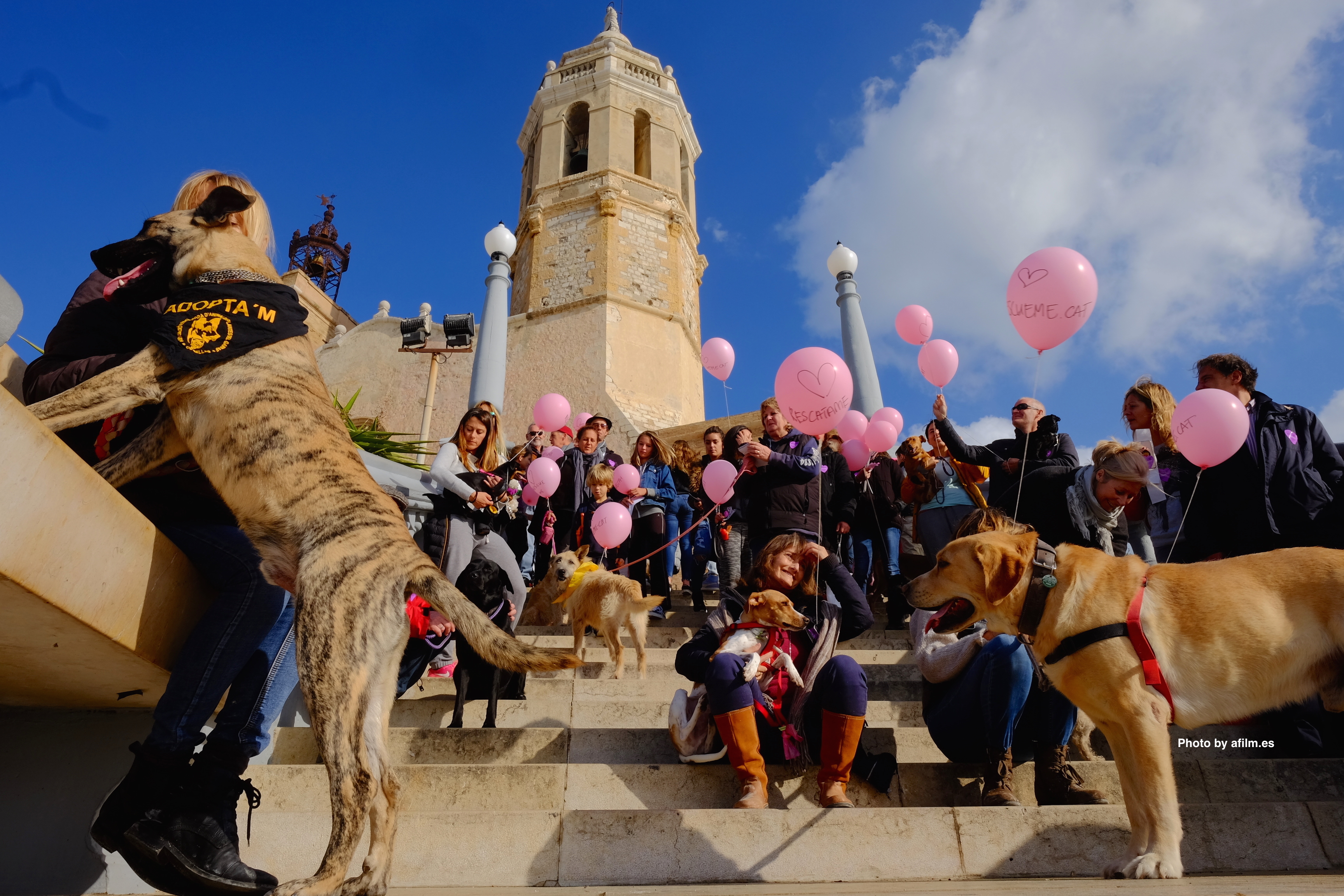 Animal adoption Cubelles Barcelona